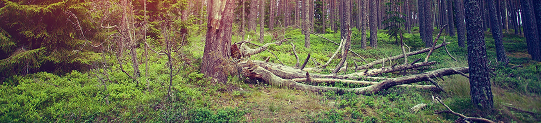 How to Clear Your Pipeline of Dead Wood